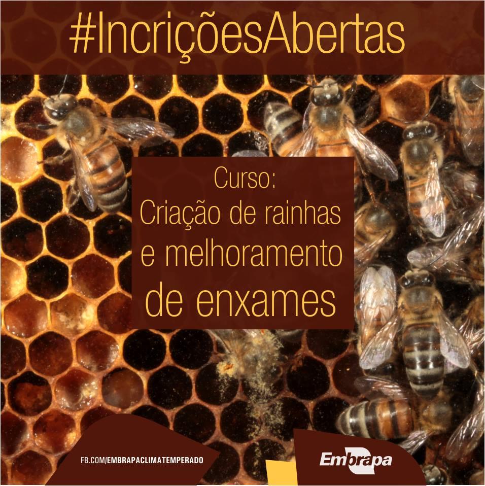 Curso criação de abelhas rainhas