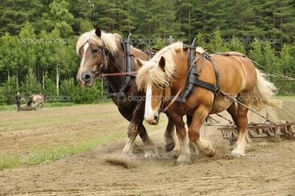 depositphotos_11537682-Working-horse