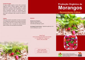 Cultivo Orgânico de Morango 1