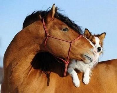 horse_dog