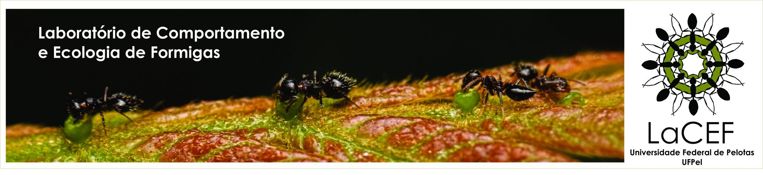 Logo Laboratório de Comportamento e Ecologia de Formigas - LACEF