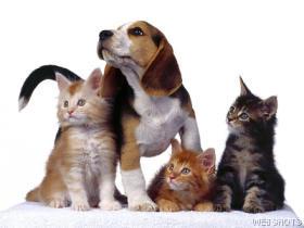 gatos cão